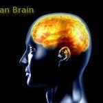 MicroRNAs and memory