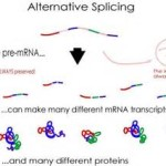 From base editing to RNA editing (4)