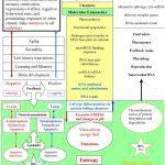 Quantum biology vs atheism (2)