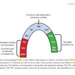 MicroRNA-mediated population control (6)